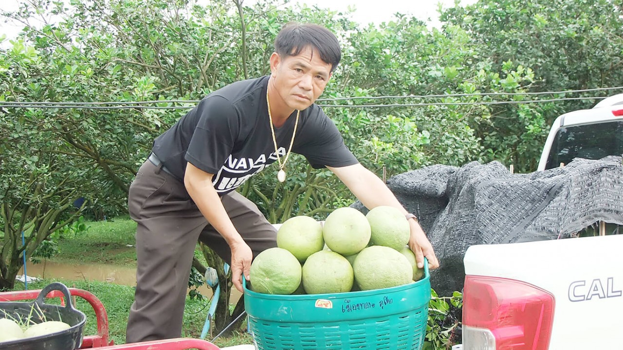 เกษตรกร ป.4 เผยเทคนิคสวนส้มโอเงินล้าน ทำยังไงไปดูกัน
